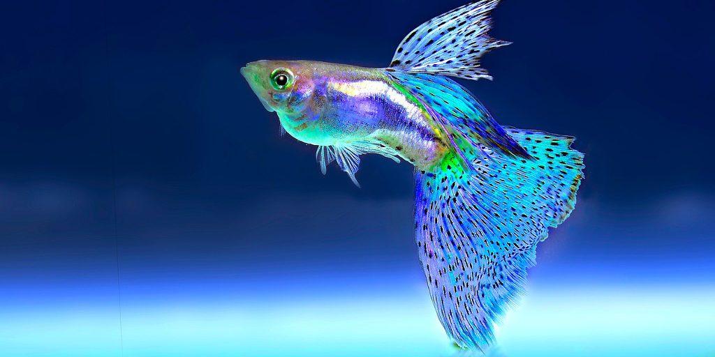 Mama Fish Saves