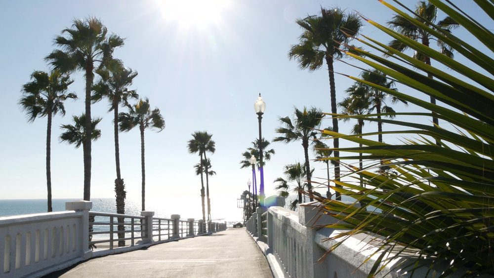 los angeles california beach with palm trees